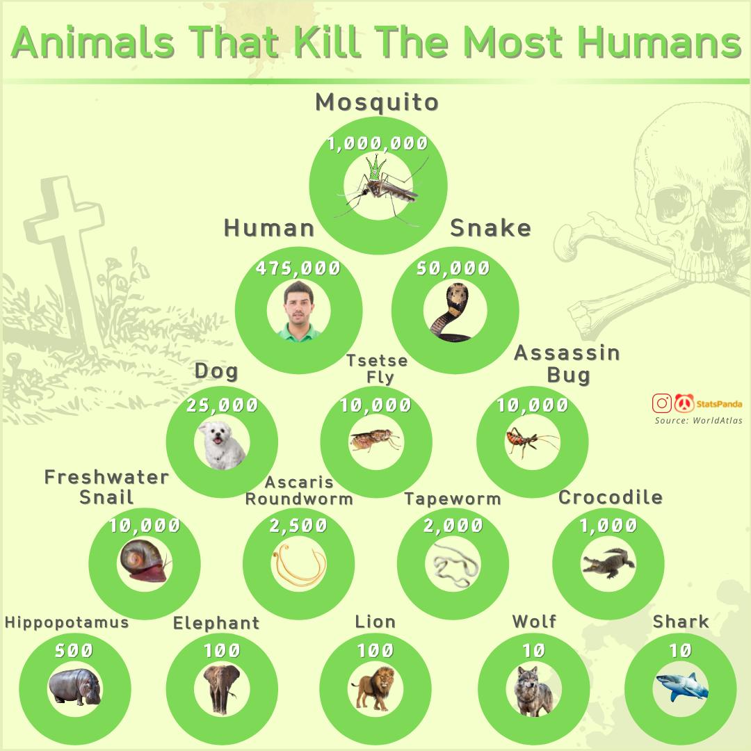 animals-kill-most-humans-chartistry